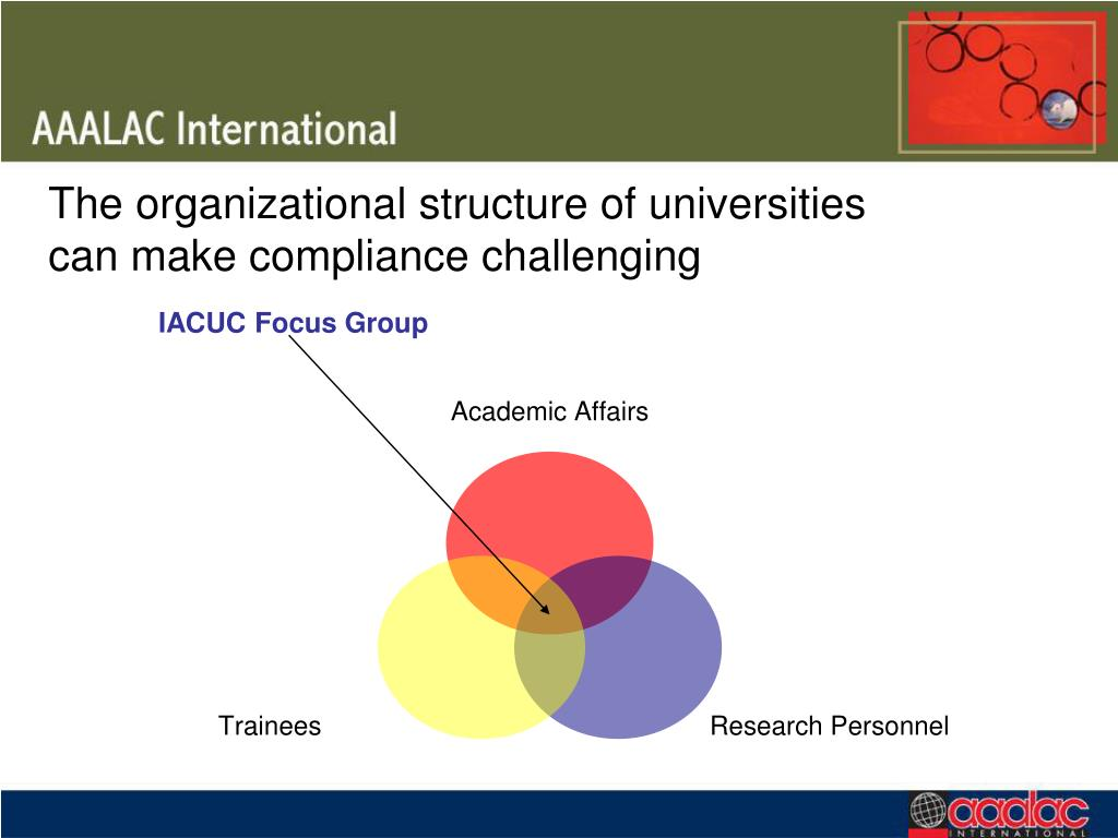 The organizational structure of universities