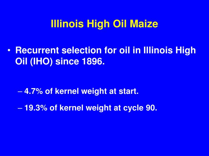 Illinois high oil maize