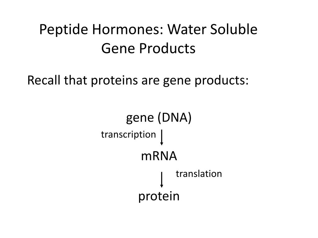 Peptide Hormones: Water Soluble Gene Products