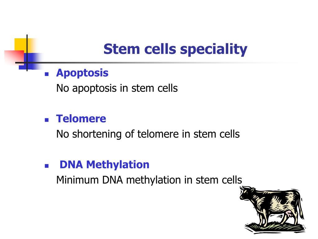 Stem cells speciality