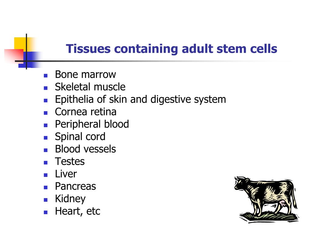 Tissues containing adult stem cells