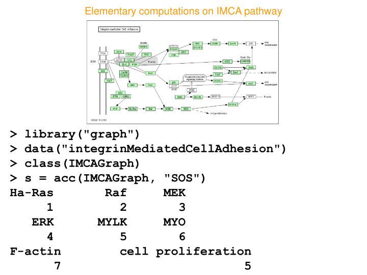 Elementary computations on IMCA pathway