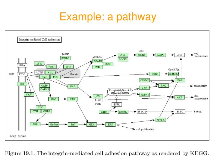 Example: a pathway