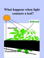 what happens when light contacts a leaf