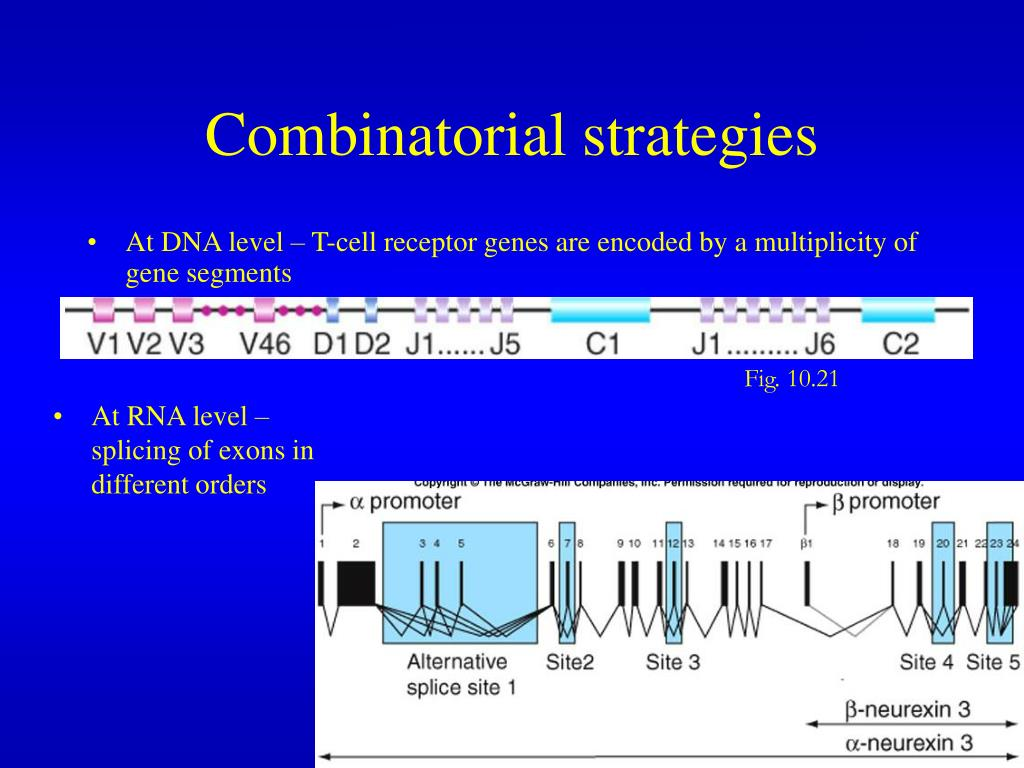 Combinatorial strategies