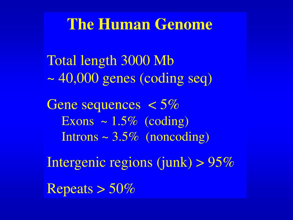 Human genome content