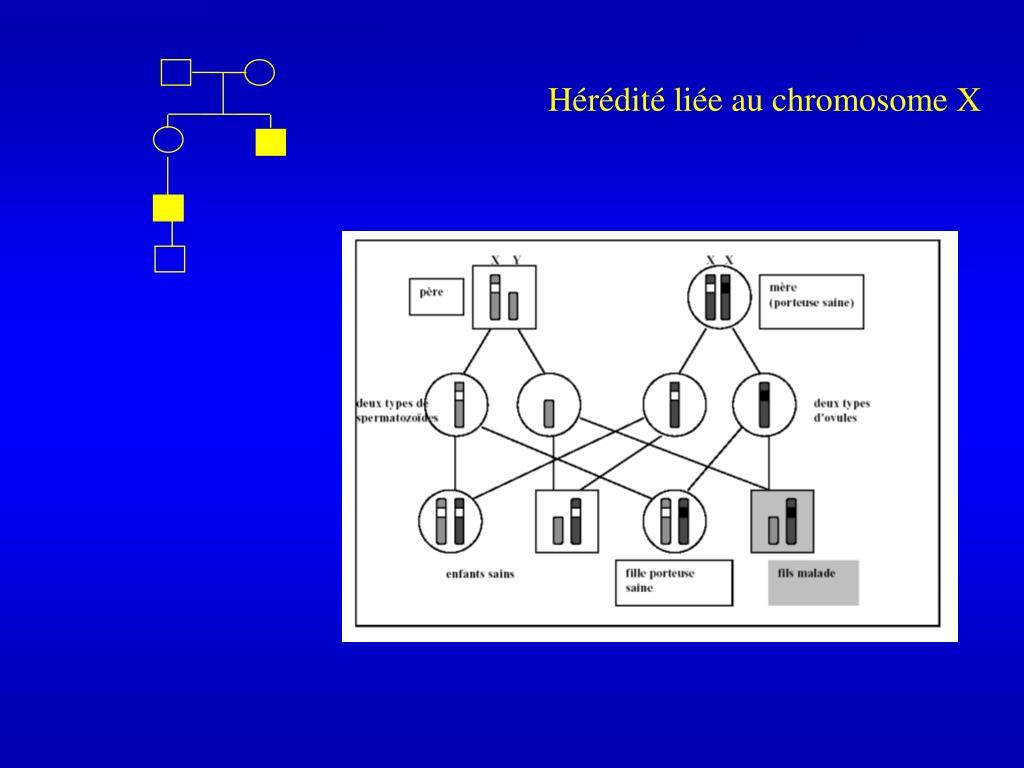 Hérédité liée au chromosome X