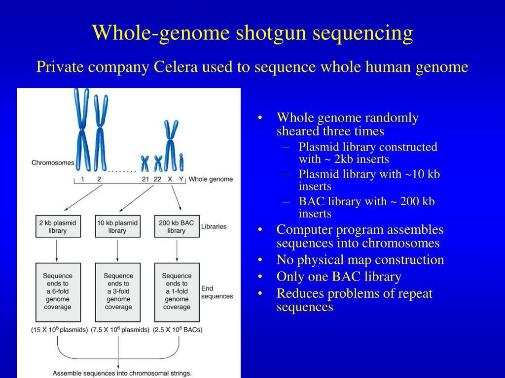 Whole-genome shotgun sequencing