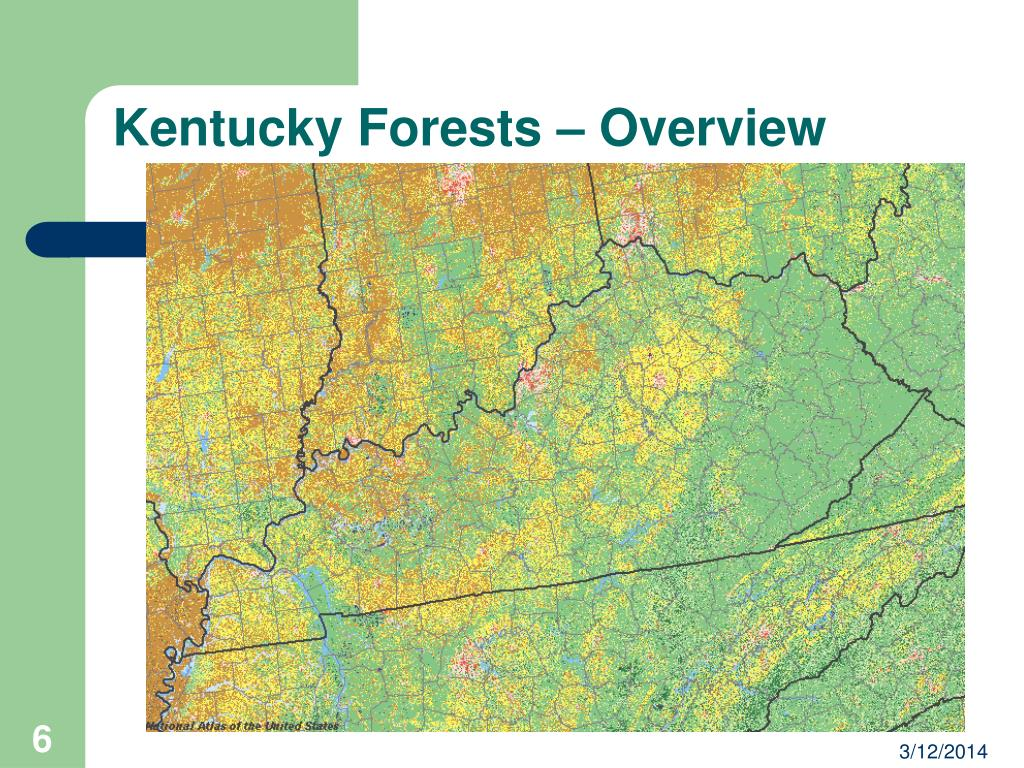 Kentucky Forests – Overview