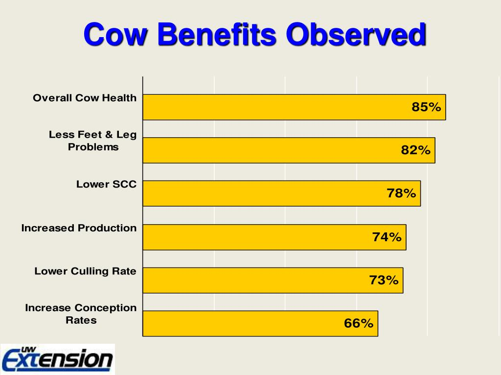 Cow Benefits Observed