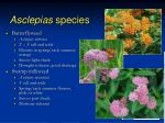 asclepias species