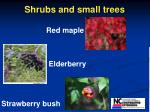 shrubs and small trees