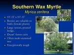 southern wax myrtle myrica cerifera