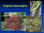 virginia sweetspire