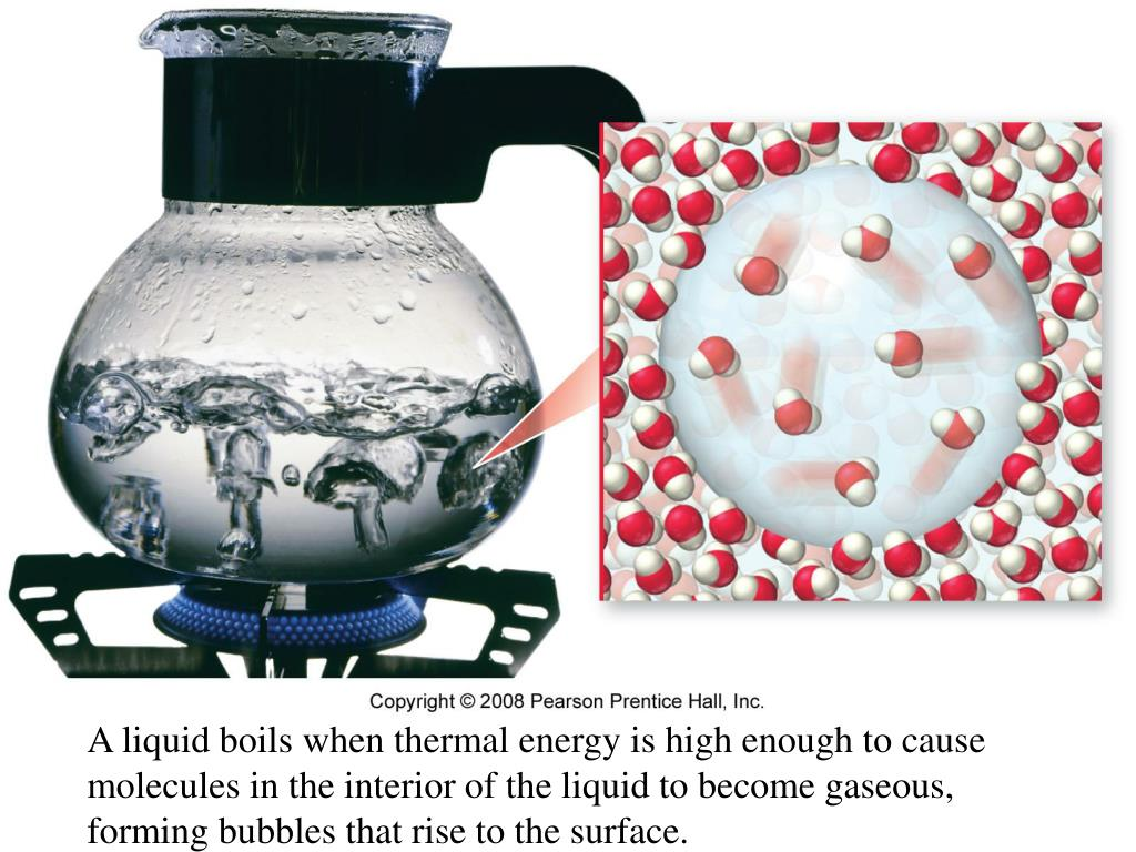 A liquid boils when thermal energy is high enough to cause molecules in the interior of the liquid to become gaseous, forming bubbles that rise to the surface.