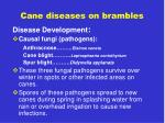 cane diseases on brambles