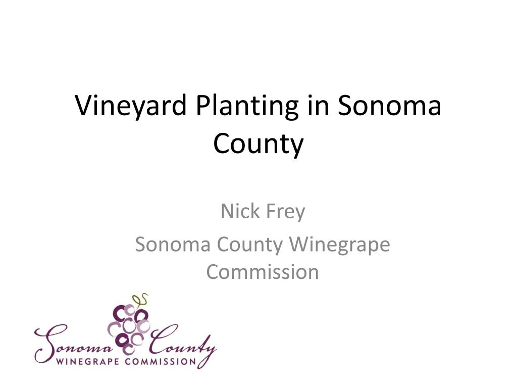 vineyard planting in sonoma county l.