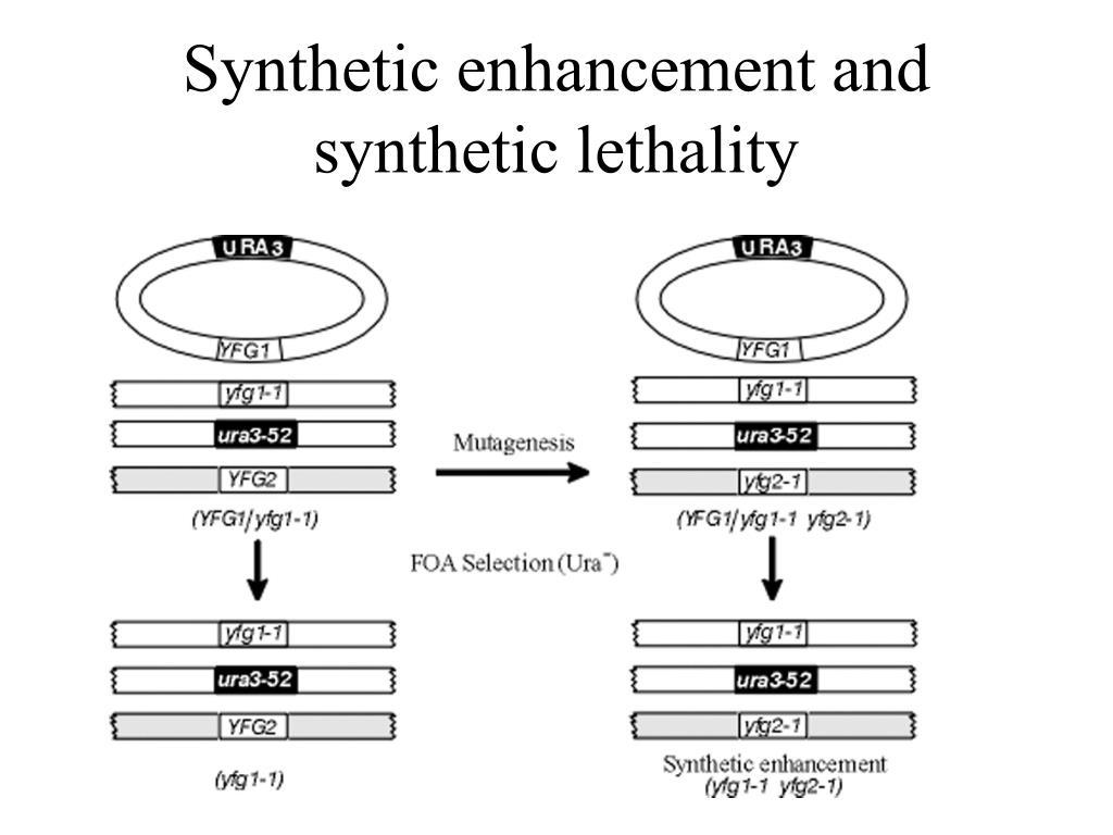 Synthetic enhancement and synthetic lethality