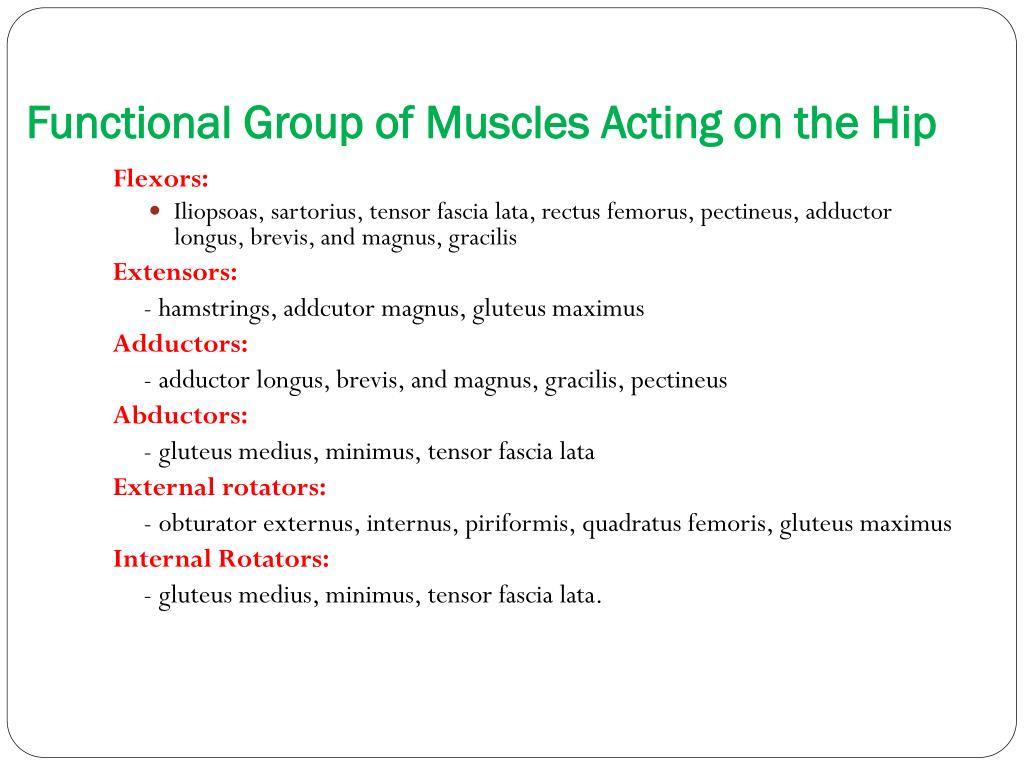 Functional Group of Muscles Acting on the Hip