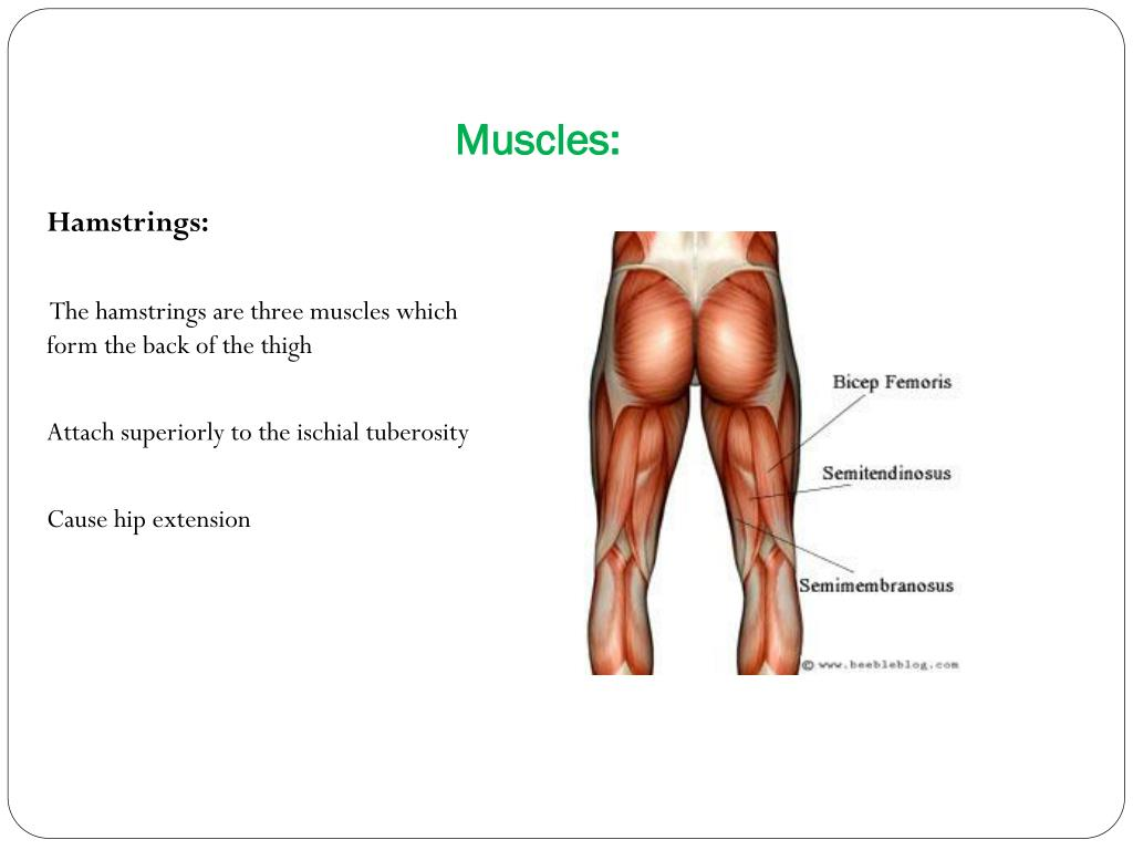Muscles: