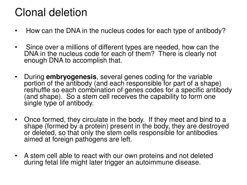 How can the DNA in the nucleus codes for each type of antibody?