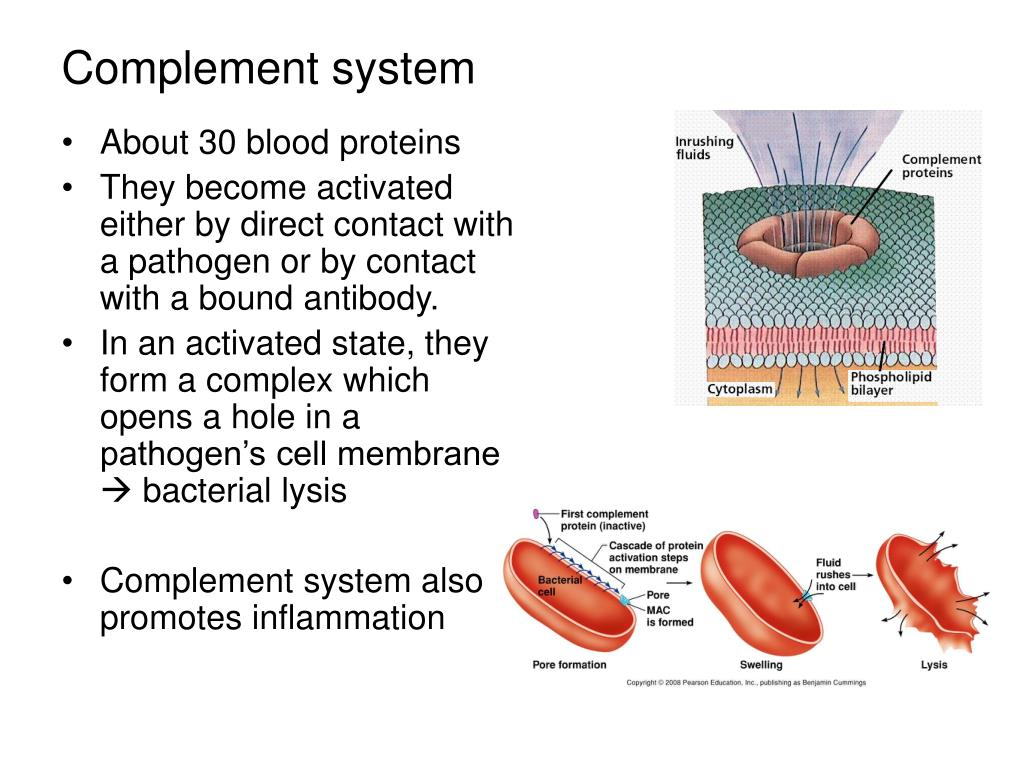 About 30 blood proteins