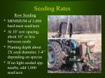 seeding rates