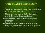 why plant seedlings