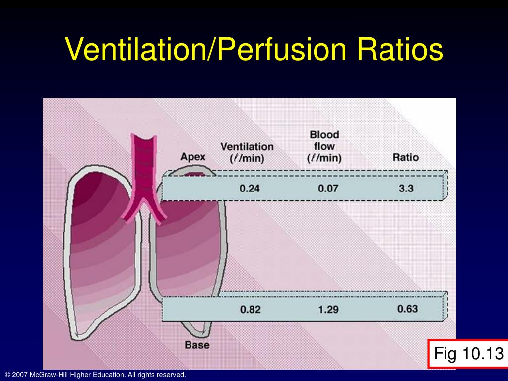 Ventilation Perfusion Ratio : Ppt chapter respiration during exercise powerpoint