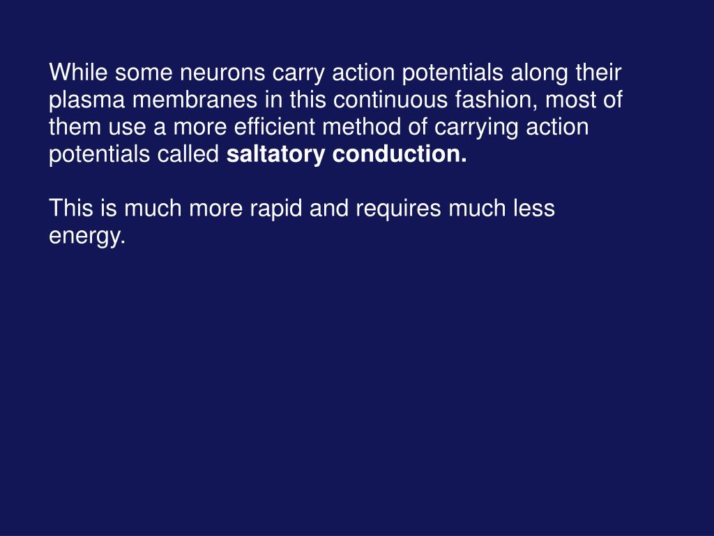 While some neurons carry action potentials along their plasma membranes in this continuous fashion, most of them use a more efficient method of carrying action potentials called