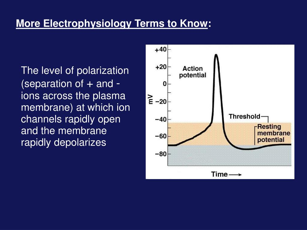 More Electrophysiology Terms to Know