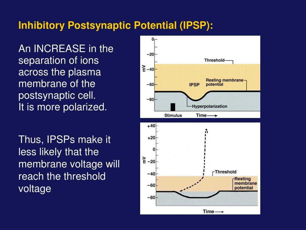 Inhibitory Postsynaptic Potential (IPSP):