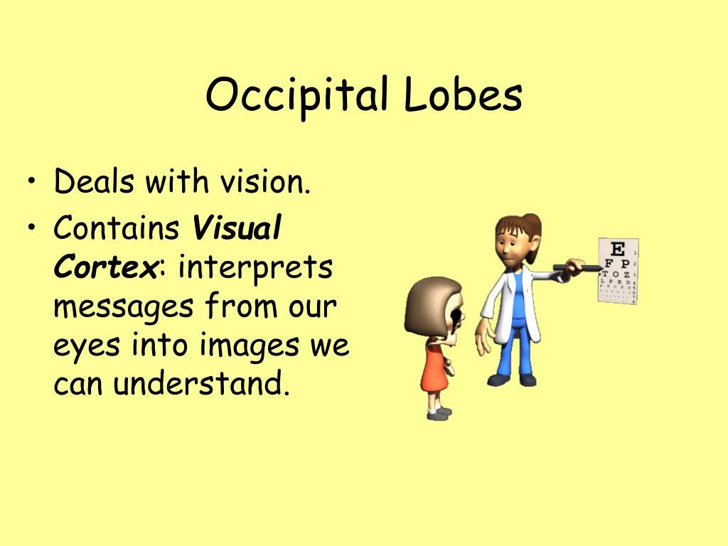 Occipital Lobes