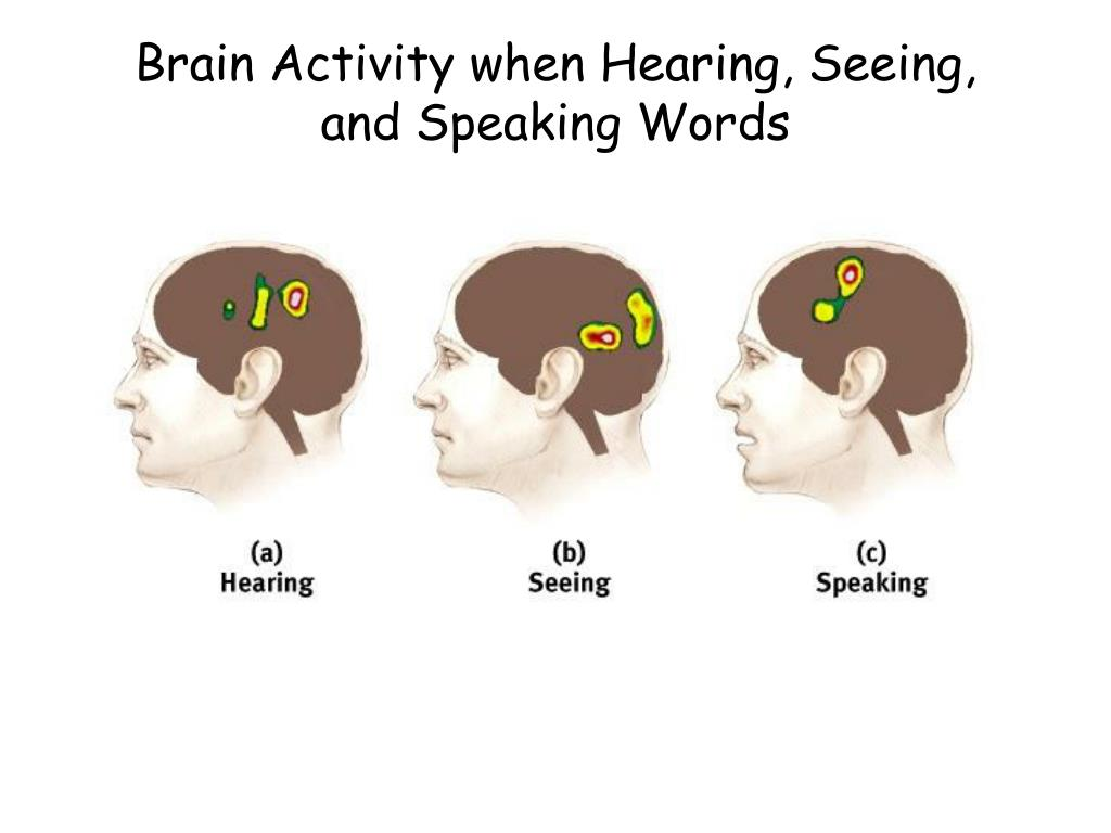 Brain Activity when Hearing, Seeing, and Speaking Words
