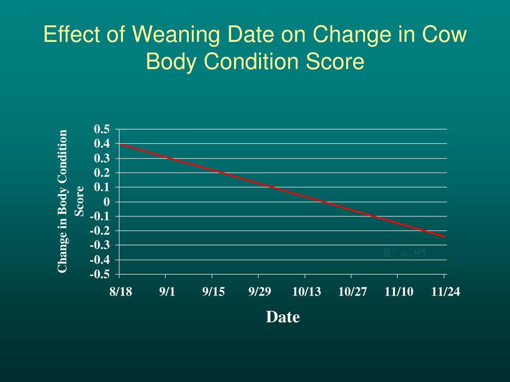 Effect of Weaning Date on Change in Cow Body Condition Score