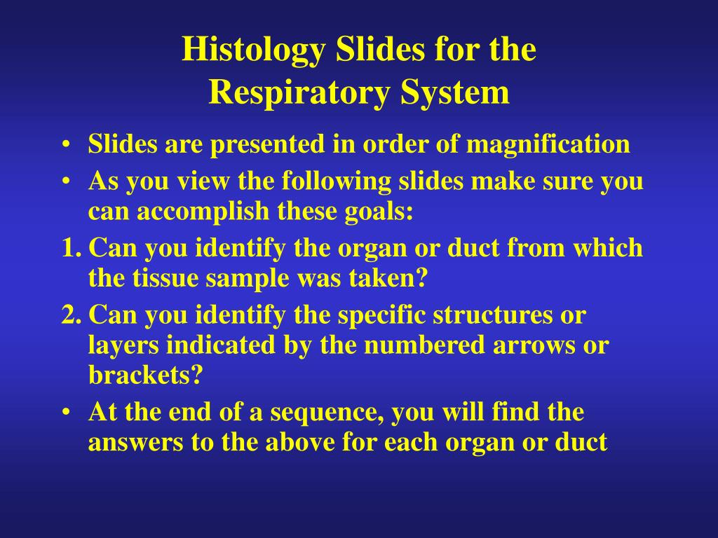 histology slides for the respiratory system l.