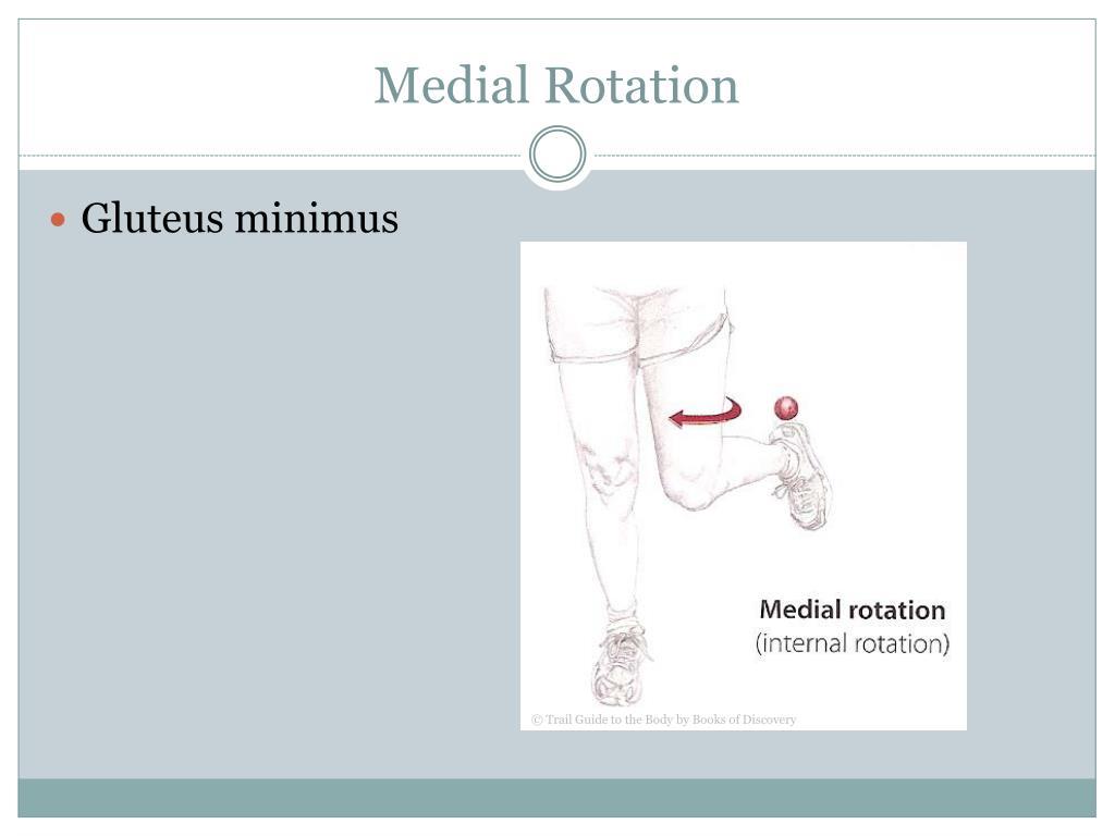 Medial Rotation