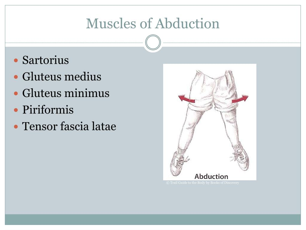 Muscles of Abduction