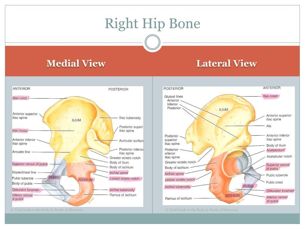 Right Hip Bone