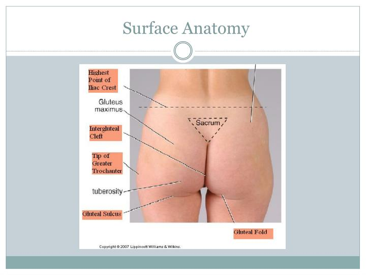 Surface anatomy3