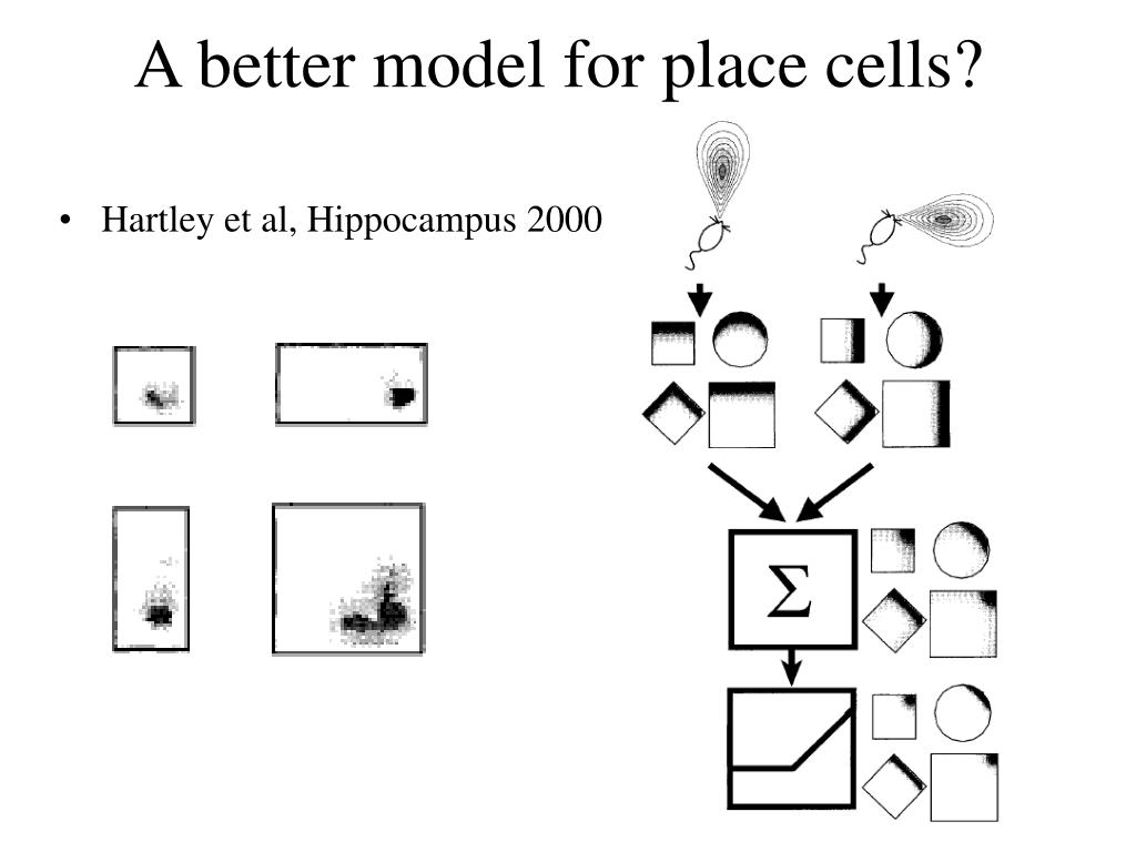 A better model for place cells?