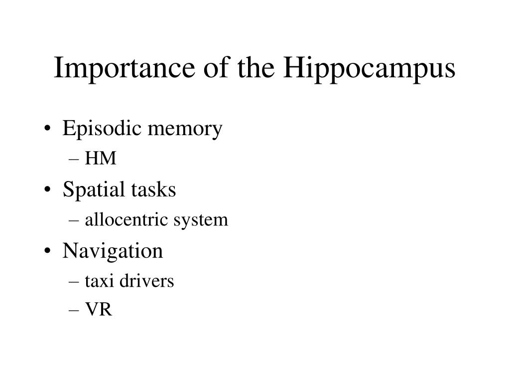 Importance of the Hippocampus