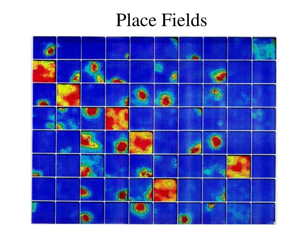 Place Fields