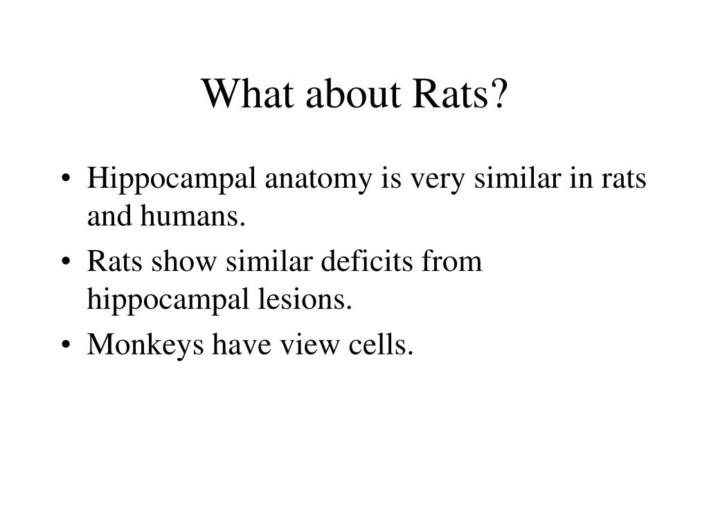 What about Rats?