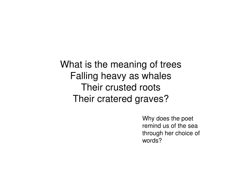 What is the meaning of trees