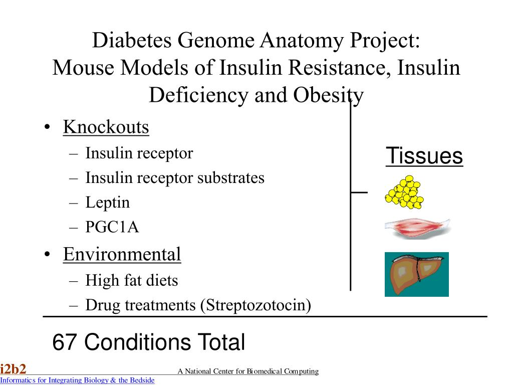 Diabetes Genome Anatomy Project: