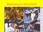 beekeeping in queensland4
