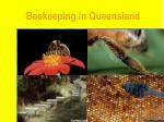 beekeeping in queensland8