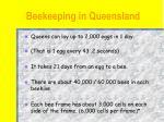 beekeeping in queensland9