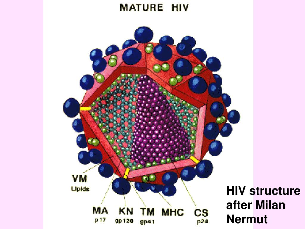 HIV structure after Milan Nermut
